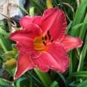 Flag Garden Blooms