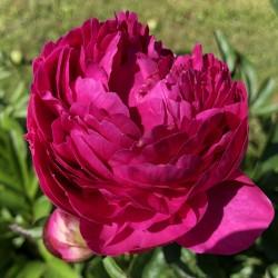 Iris Gentle Reminder