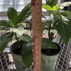 Picture of sample plants